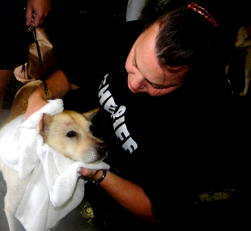 Lt. Shannon Desroche dries off Lucky, a dog brought in  with her owner, Ramona Billot, who was one of the Plaquemines residents rescued and brought to the St. Bernard Prison which was used as a shelter.