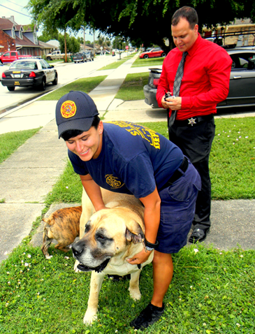 St. Bernard Parish firefighter Rebecca Stechmann plays with her Mastiff named Stella, one of two dogs she was reunited with Thursday after the dogs were recovered at the home of a man booked with possession of stolen property, her canines. In the background is Sheriff's Det. Ryan Melerine, who handled the case.